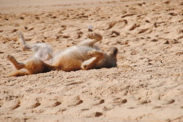 A sand bath... by Chinga