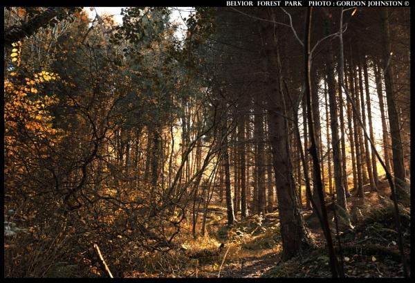 Autumn Walk by GFJ