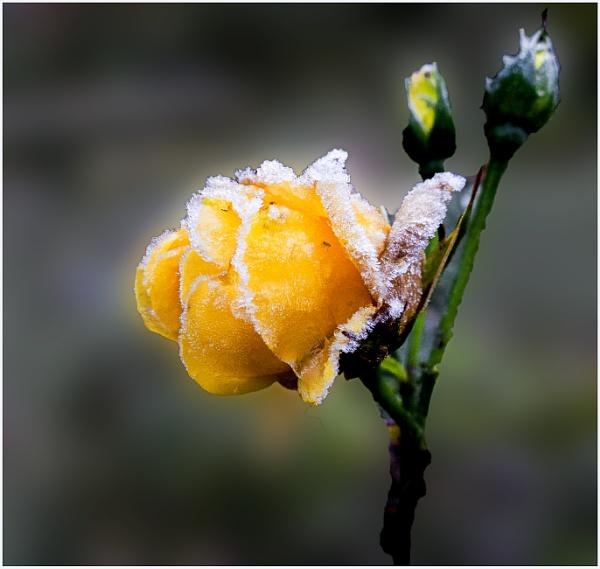 November frost by derekp