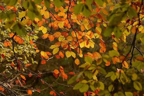 Golden Brown by ShaunsPics