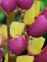 Sumer raindrops