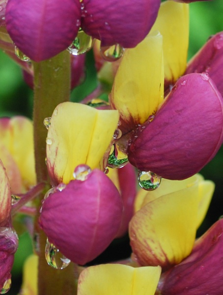 Sumer raindrops by Drighlynne