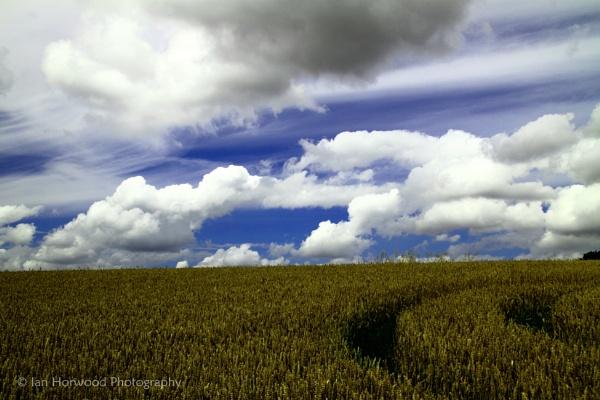 Summer Fields by horbie
