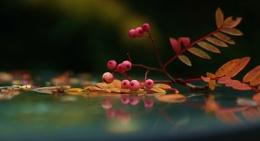 Image of Autumn.