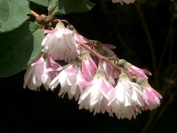 pompom flower! by laura1