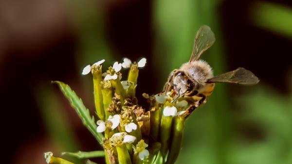 Pollinating Bee by Niicoolene