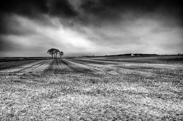 Fifes Fields by widtink