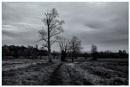 Winter Tree's by Nikonuser1