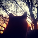 Sunrise and Nancy by ChunkyButFunky