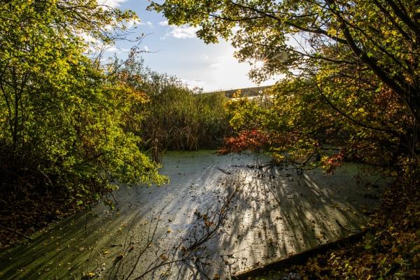 Forgotten pond by Graysshootin