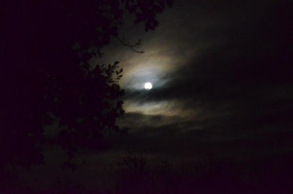 Night of the Super Moon by cdnikon