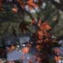 Last Leaves... by Scottishlandscapes