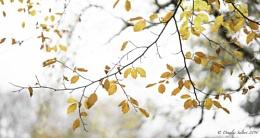 Last Tango of Autumn...
