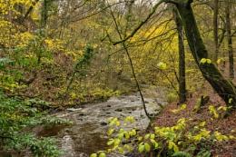 Eller Beck, Skipton Castle Woods