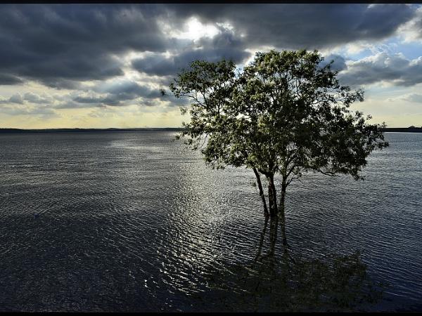 Land or Seascape? by Webbs