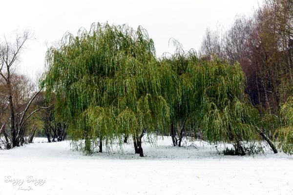 With first snow by sergeysergaj