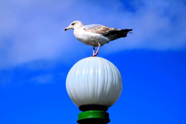 Southport, seagull by corkycat