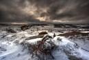 Snow Laden by chris-p