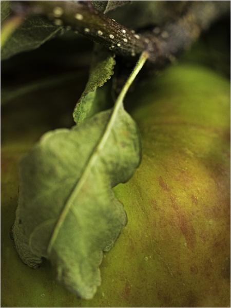 Dappled Apple by woolybill1
