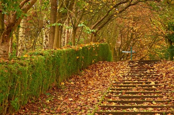 Autumn Mark iv I Think? by waineswitch