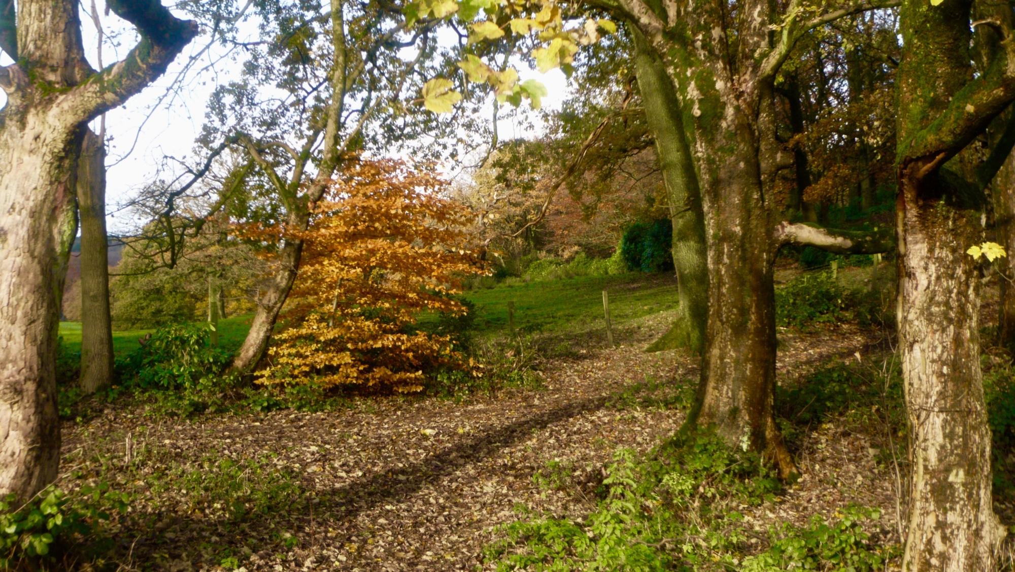 Autumn Country Park