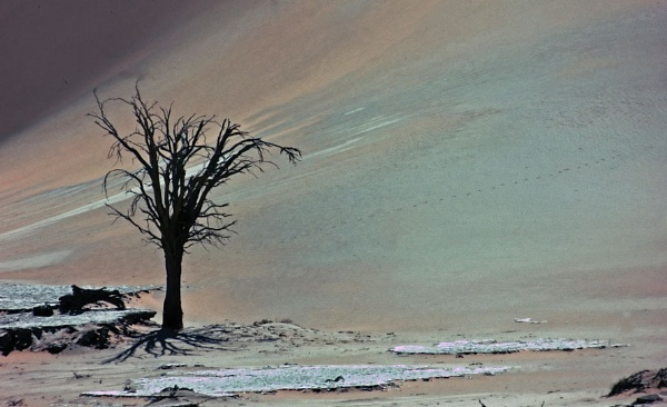 Lone Tree by lonely_oryx