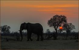 Elephant walk at sunrise