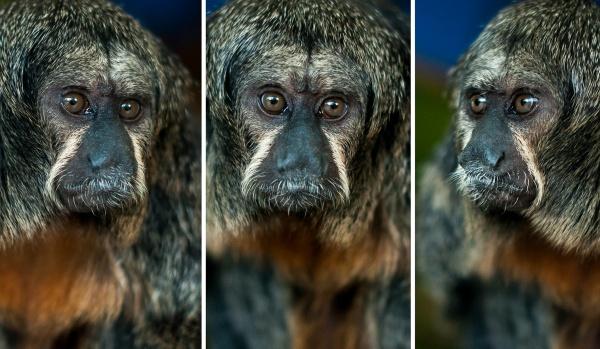 Monkey Business by JFitz