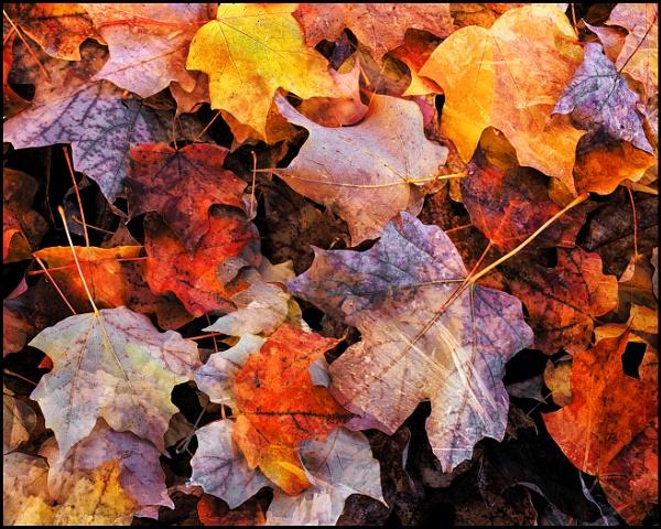 Fallen Leaves by fentiger