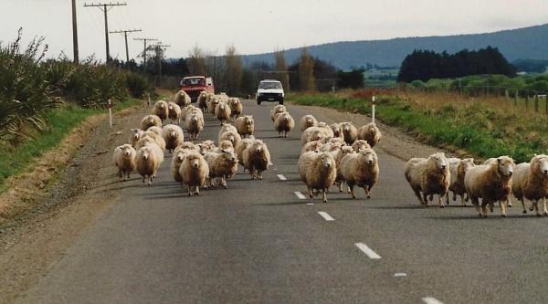 New Zealand traffic jam by djh698