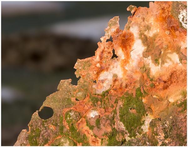 Rust Wins by capto