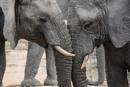 The elephants by ColleenA