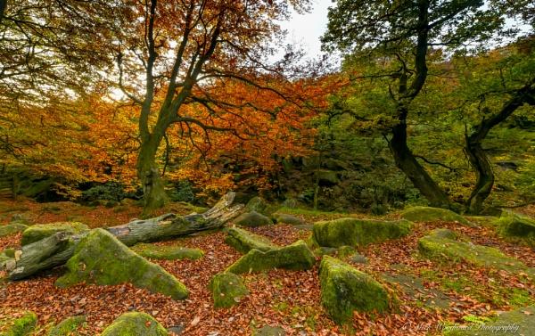 Autumn Gold by kojak