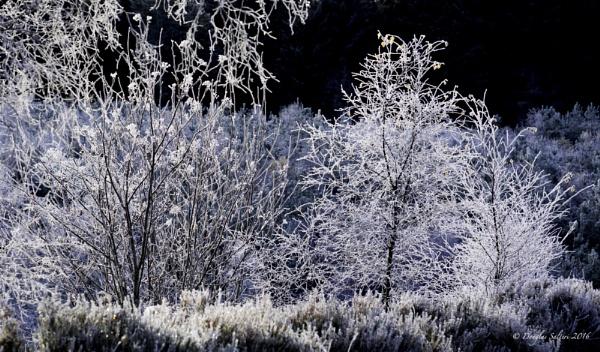 Frosty... by Scottishlandscapes