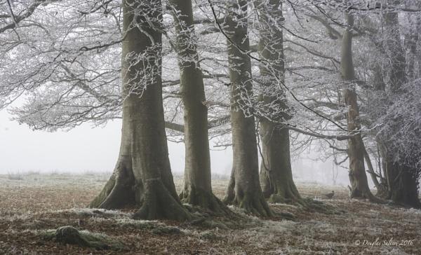Foggy Pheasant... by Scottishlandscapes