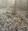 Freezing Fog... by Scottishlandscapes