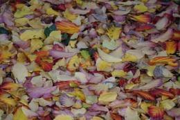 natures carpet.