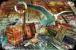 Birds in loft