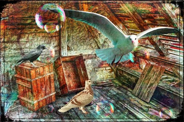 Birds in loft by fellingmal