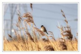 South Wales Wetland