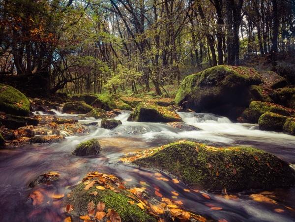 Autumnal Golitha by blohum