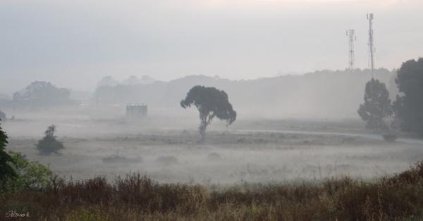 Misty Morning by SHR