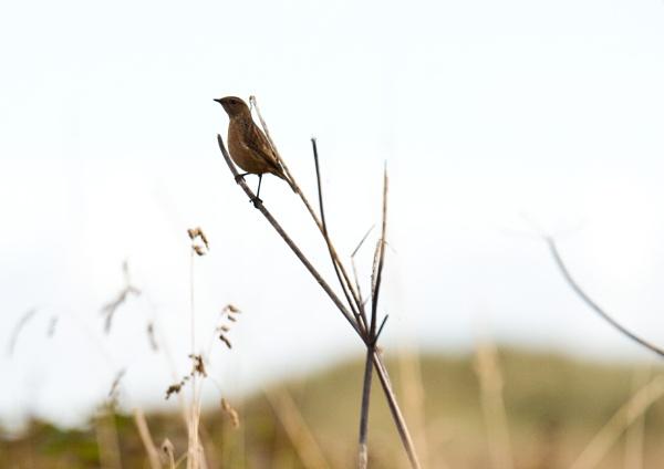 the bird in the fields by Owen05