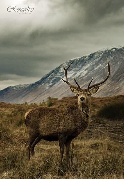 Royalty by jimgordon666