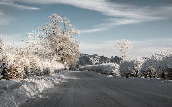 Winter Fresh by jimgordon666