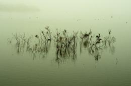 Submerged trees
