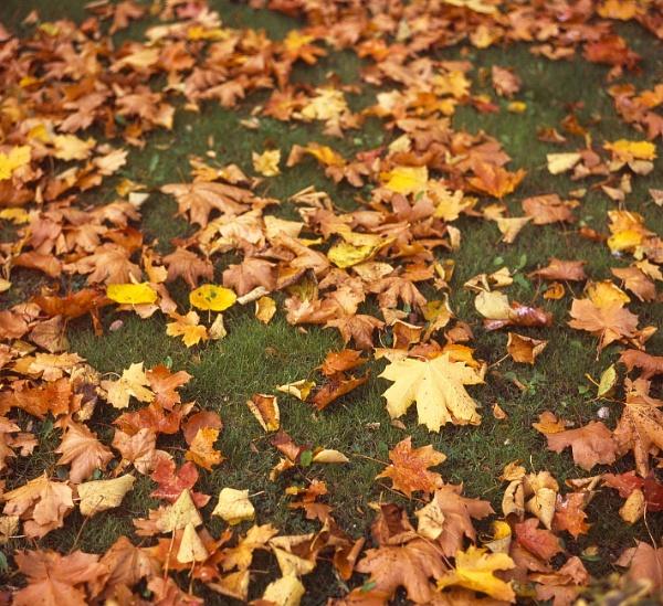 Fallen Leaves by pentaxpete