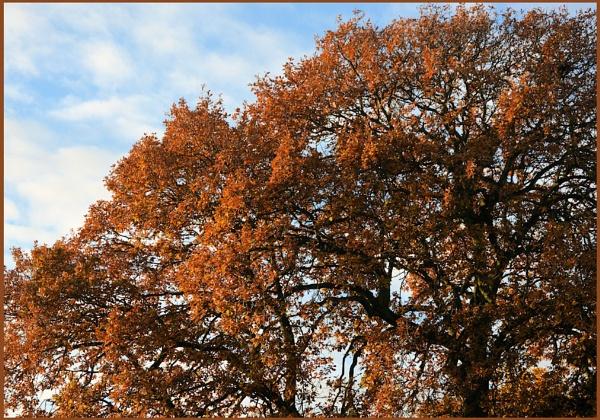 ** A Mighty Oak ** by Rock