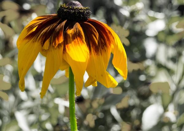 Madeira flora by Ian01
