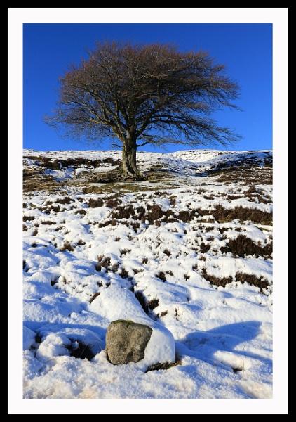 tree by callumcorrie